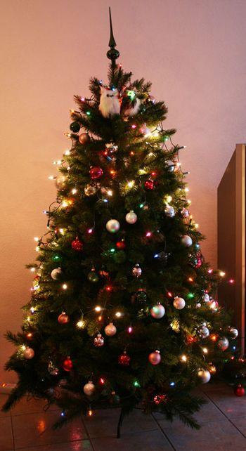 Nieuwe kerstboom a